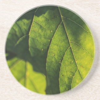 Green Leaf Veins Coaster