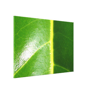 Green Leaf Viens Gallery Wrapped Canvas