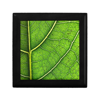 Green LeafJewellery/Gift Box