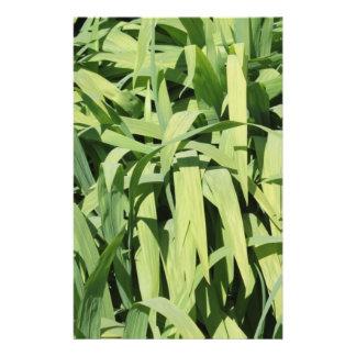 Green Leaves. 14 Cm X 21.5 Cm Flyer