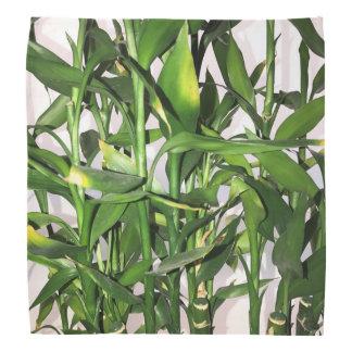 Green leaves and bamboo shoots house plant bandana