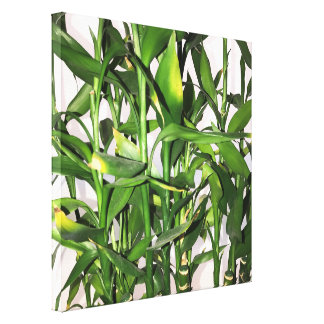 Green leaves and bamboo shoots house plant canvas print