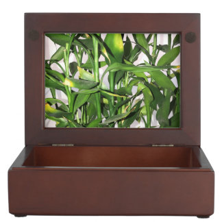 Green leaves and bamboo shoots house plant keepsake box