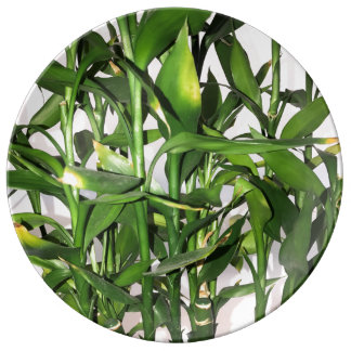Green leaves and bamboo shoots house plant plate