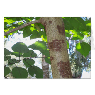green leaves and tree trunk with cool bark card