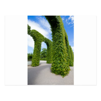 Green leaves arches postcard