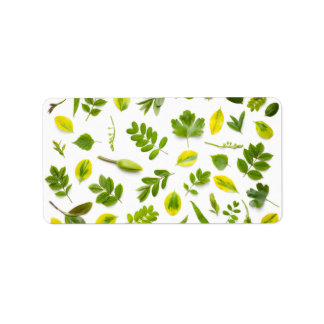 Green Leaves Isolated on White Background Label
