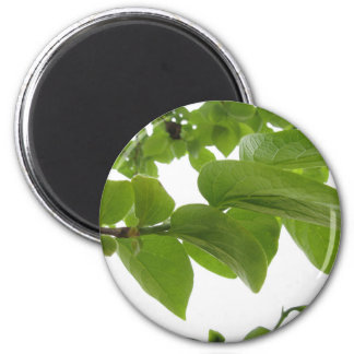 Green leaves of persimmon tree on white background 6 cm round magnet