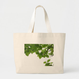 Green leaves of persimmon tree on white background large tote bag