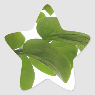 Green leaves of persimmon tree on white background star sticker