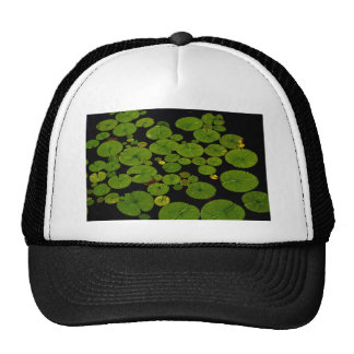 green leaves of water lilies cap