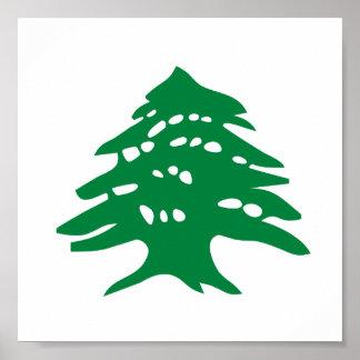 Green Lebanon Cedar Tree Poster