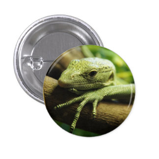 Green Lizard 3 Cm Round Badge