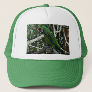 Green macaw hat