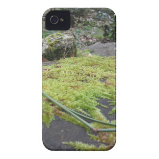 Green moss in nature Detail of moss covered stone Case-Mate iPhone 4 Case