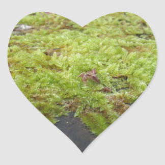 Green moss in nature Detail of moss covered stone Heart Sticker