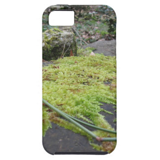Green moss in nature Detail of moss covered stone iPhone 5 Cover