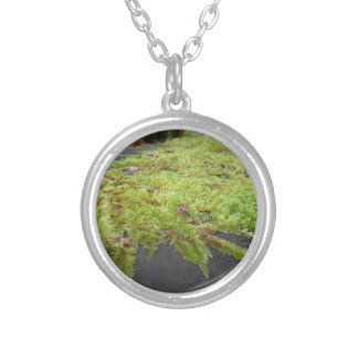 Green moss in nature Detail of moss covered stone Silver Plated Necklace