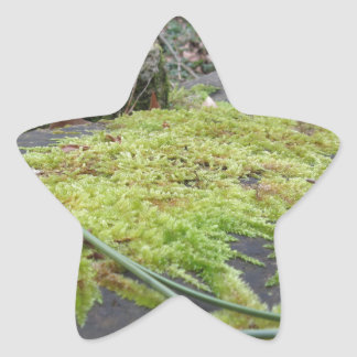 Green moss in nature Detail of moss covered stone Star Sticker
