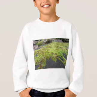 Green moss in nature Detail of moss covered stone Sweatshirt