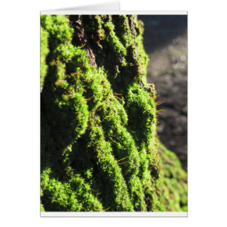 Green moss in nature  Detail of moss covered trunk Card