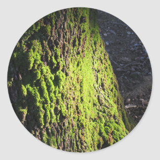 Green moss in nature  Detail of moss covered trunk Classic Round Sticker