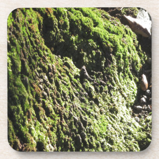 Green moss in nature  Detail of moss covered trunk Coaster