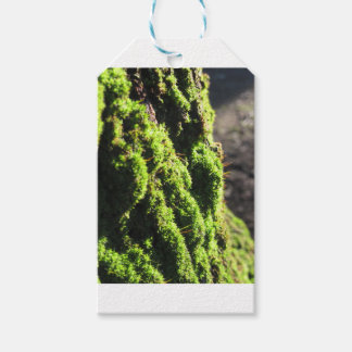 Green moss in nature  Detail of moss covered trunk Gift Tags