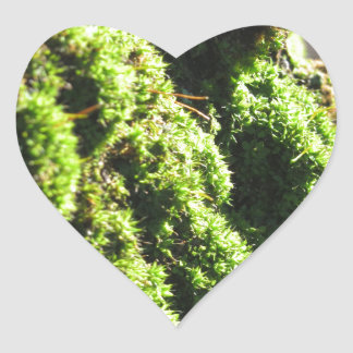 Green moss in nature  Detail of moss covered trunk Heart Sticker