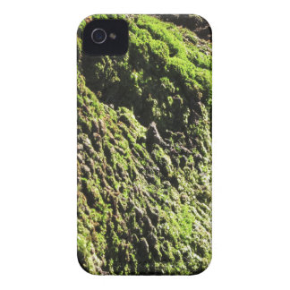 Green moss in nature  Detail of moss covered trunk iPhone 4 Case-Mate Cases
