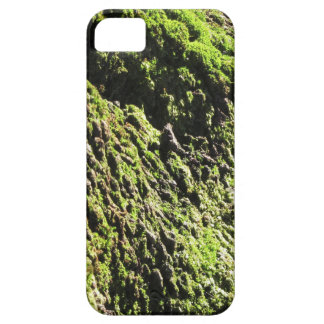 Green moss in nature  Detail of moss covered trunk iPhone 5 Cover