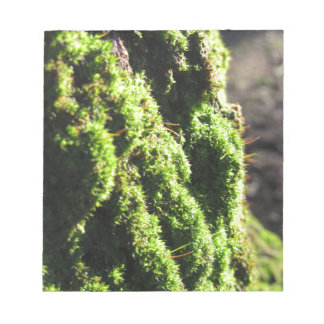 Green moss in nature  Detail of moss covered trunk Notepad