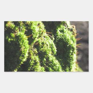 Green moss in nature  Detail of moss covered trunk Rectangular Sticker