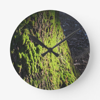 Green moss in nature  Detail of moss covered trunk Round Clock