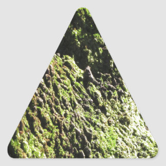 Green moss in nature  Detail of moss covered trunk Triangle Sticker