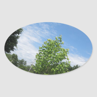 GREEN nature tree skyline NewJersey USA NVN675  GI Oval Sticker