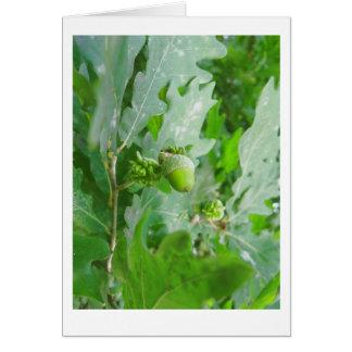 green oak acorn card