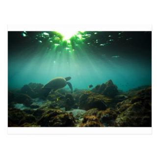 Green ocean lagoon sea turtle underwater postcard