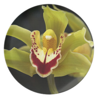 Green Orchid Melamine Plate