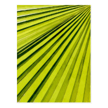 Green Palm Frond Postcards