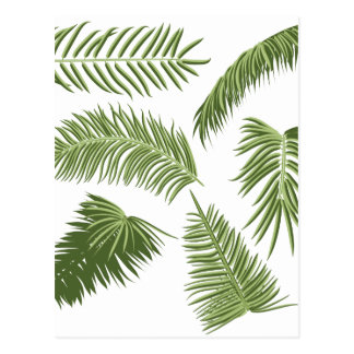 Green Palm Leaves Postcard