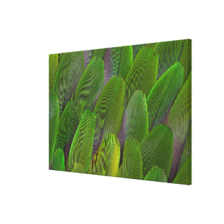Green Parrot Feathers Close Up Canvas Print