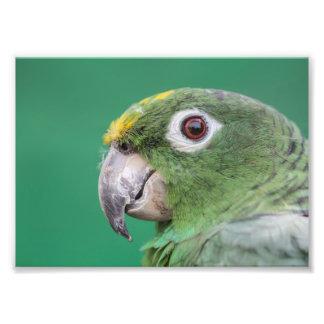 Green Parrot Photo Art