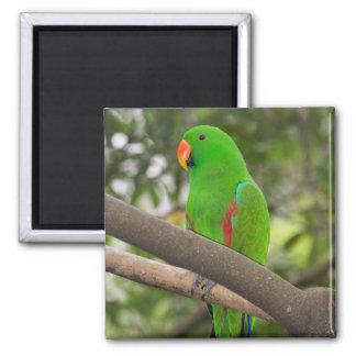 Green Parrot Portrait Magnet
