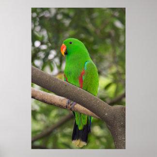 Green Parrot Portrait Poster