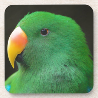 Green Parrot Profile Coaster