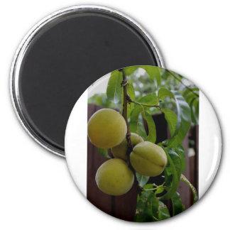 Green Peach Notecards 6 Cm Round Magnet