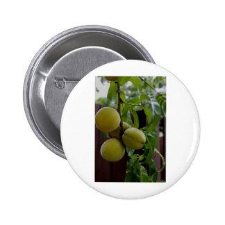 Green Peach Notecards Pinback Button