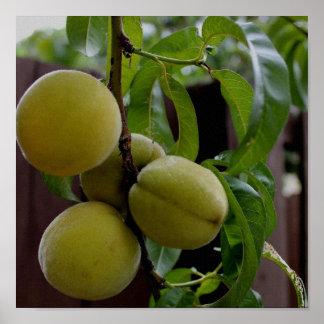 Green Peaches Print