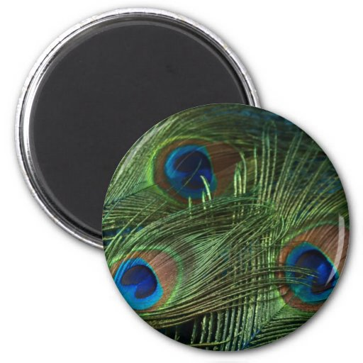 Green Peacock Feathers Fridge Magnets
